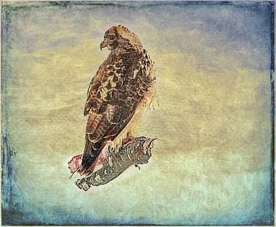 Digital Art - An Art Portrait Of A Red Tailed Hawk. by Rusty R Smith
