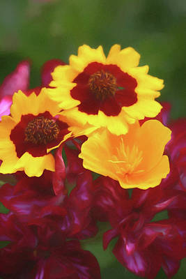 Photograph -   Yellow And Red Flowers by Rusty R Smith