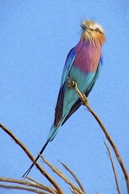 Photograph - A Painterly Lilac Breasted Roller by Kay Brewer
