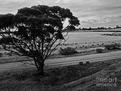 Photograph - An Australian Tree Bw by Tim Richards
