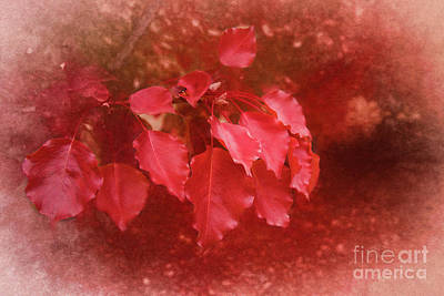 Photograph - An Autumn Bunch by Elaine Teague