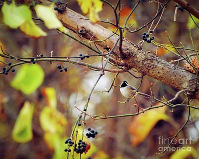 Photograph - An Autumn Chickadee by Kerri Farley