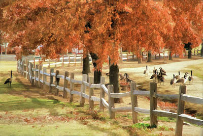 Photograph - An Autumn Day At The Park by Donna Kennedy