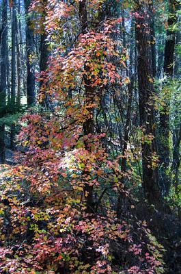Photograph - An Autumn Hike  by Saija Lehtonen
