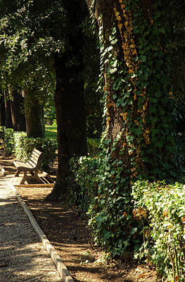 Natural Landscape Photograph - An Autumn Landscape by Andrea Mazzocchetti