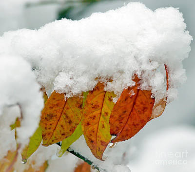 Photograph - An Autumn Snow by Kerri Farley
