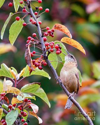 Photograph - An Autumn Song by Kerri Farley
