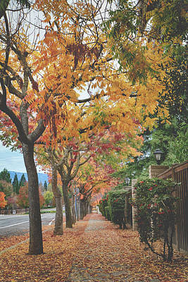 Photograph - An Autumn Walk by Laurie Search