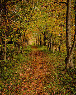 Photograph - An Autumn's Walk by Kevin Senter
