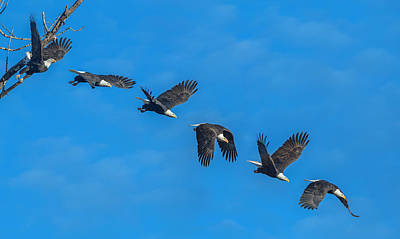 Photograph - An Eagle Flight Path by Angie Vogel