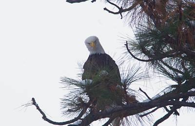 An Eagle Looks Down Art Print