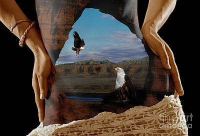 Photograph - An Eagles Vision by Craig Lovell
