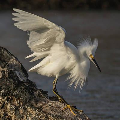 Egret Photograph - An Egret On Driftwood by Bruce Frye