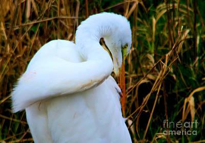 Photograph - An Egret Preening Itself by Jeff Swan