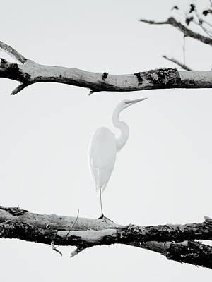 An Egret Art Print by Rachel Morrison