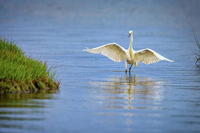 Migratory Photograph - An Egret Spreads Its Wings by Rick Berk