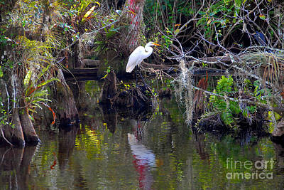 Photograph - An Egrets World by David Lee Thompson