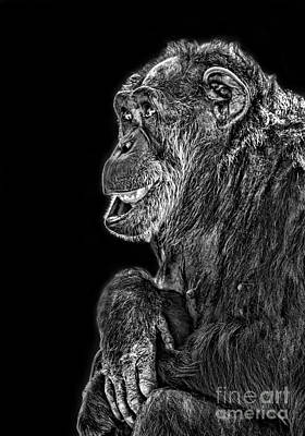 Photograph - An Elderly Chimp Enjoying Life IIi by Jim Fitzpatrick