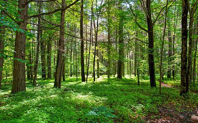 Photograph - An Emerald Forest by John M Bailey