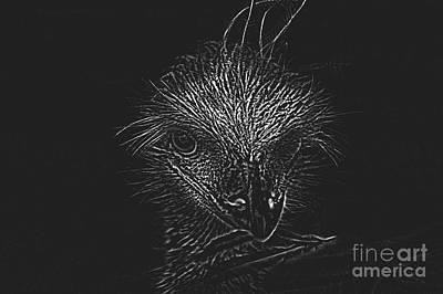 Emu Digital Art - An Emu by Bridget Catterall