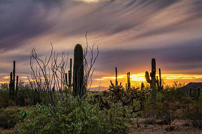 Photograph - An Enchanted Sonoran Evening  by Saija Lehtonen
