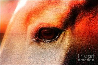 An Equine Sunset Art Print by Clare Bevan
