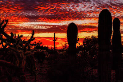 Photograph - An Evening In The Desert by Rick Furmanek