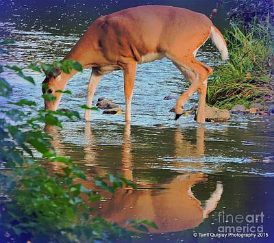 Photograph - An Evening Reflection by Tami Quigley