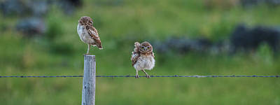 Photograph - An Evening With Two Owls by Yeates Photography