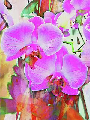 Photograph - An Exploration Of Orchids by Dorothy Berry-Lound