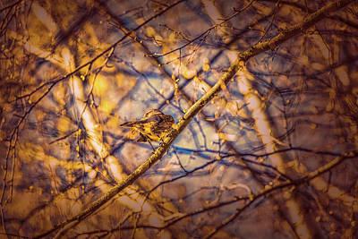 Trush Photograph - An Eye by Leif Sohlman