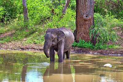 Photograph - an Indian Elephant with a flying Heron in the front view by Regina Koch