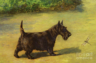 Scottish Dog Painting - An Inquisitive Look by Earl Maud