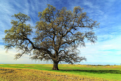 An Oak In Spring Art Print by James Eddy