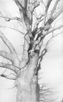 An Oak In The Park 2002  Original