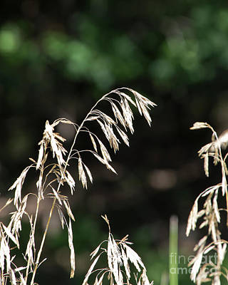Photograph - An Ode To Grass by Kathy McClure