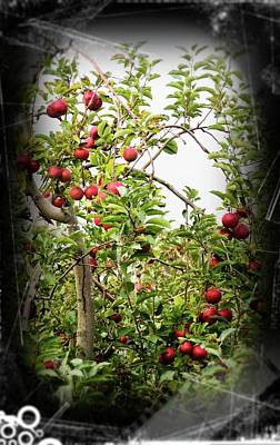 Photograph - An Old Apple Tree by Randy J Heath
