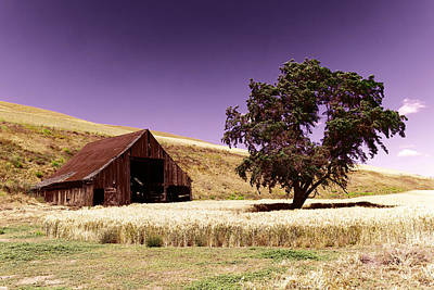 An Old Barn And A Tree Art Print by Jeff Swan