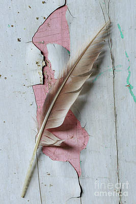 An Old Door And Feather Print by Masako Metz