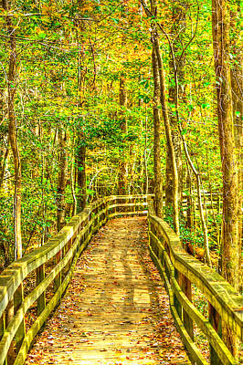 An Old Growth Bottomland Hardwood Forest Art Print by Don Mercer