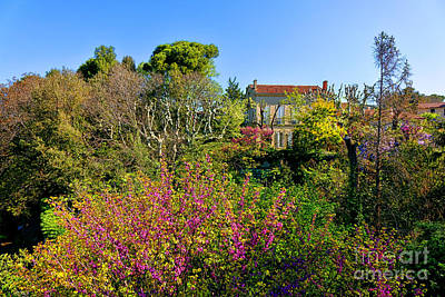 An Old House In Provence Art Print by Olivier Le Queinec