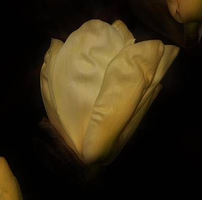 Photograph - An Opening Face by Karen Silvestri