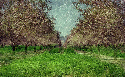 Photograph - An Orchard In Blossom In The Eila Valley by Dubi Roman