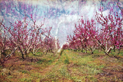 Photograph - An Orchard In Blossom In The Golan Heights by Dubi Roman