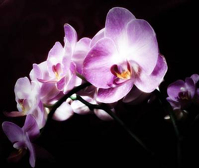 An Orchid For You Art Print