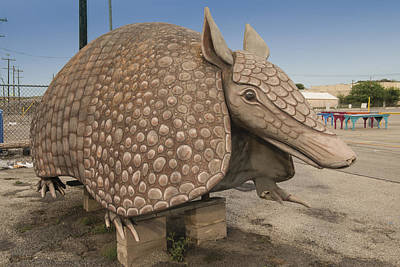 Photograph - An Oversized Armadillo At Bussey's Flea Market In Schertz by Carol M Highsmith