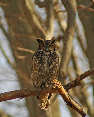 Photograph - An Owl by Raymond Salani III