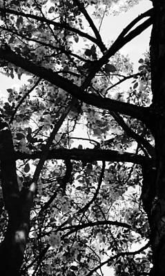 Photograph - An Upward View by Teri Schuster