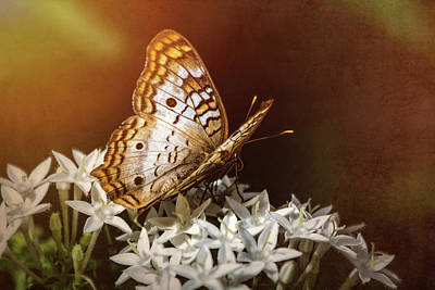 Photograph - Anartia Jatrophae - White Peacock Butterfly  by Saija Lehtonen