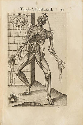 Drawing - Anatomia Del Corpo Humano by Gaspar Becerra